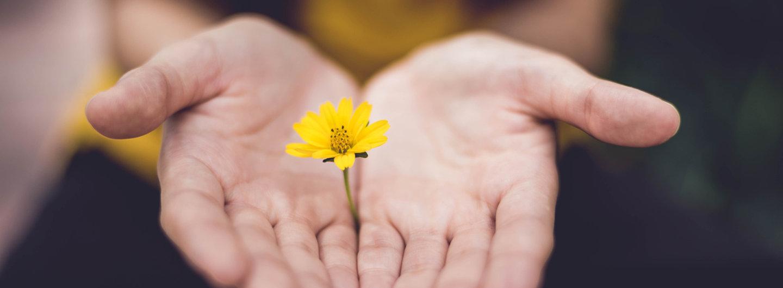 zwei geöffnete Hände präsentieren eine gelbe Blüte wie ein Geschenk