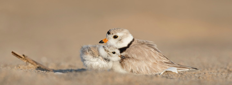 Vogelmutter beschützt ihr Küken